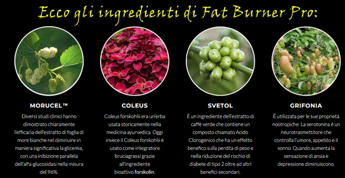 Ingredienti del brucia grassi Fat Burner Pro